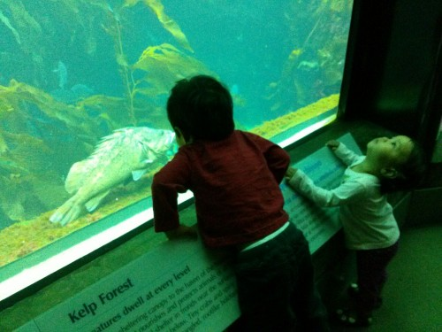 Kelp Forest at the Aquarium