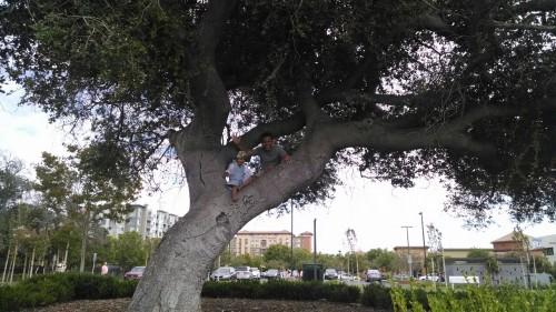 We climbed a tree