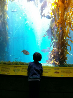 We visited the aquarium one day before a long weekend