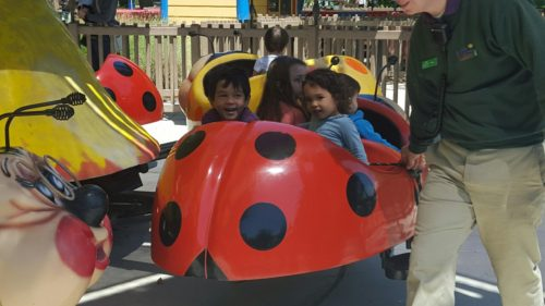 Lady bug ride