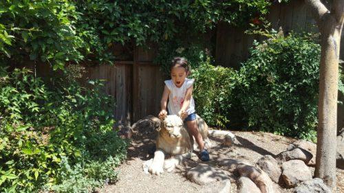 Pet lioness